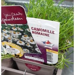Camomille Romaine B6G8