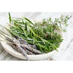 Basilic grd vert p10