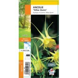 Aquilegia chrysantha...